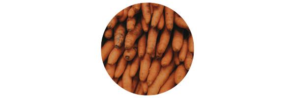 alimentos-concentracion-9